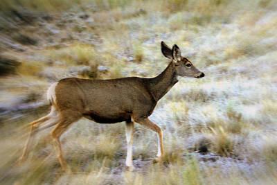 Mule Deer On The Move Art Print by Marty Koch