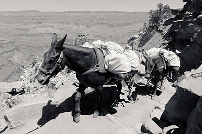 Photograph - Mule Train Bw by Julie Niemela