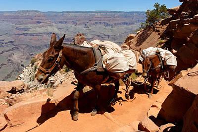 Photograph - Mule Train by Julie Niemela