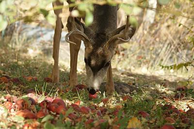 Mule Deer Buck Photograph - Mulie Buck 4 by Ernie Echols