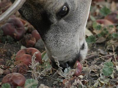 Mule Deer Buck Photograph - Mulie Buck 5 by Ernie Echols