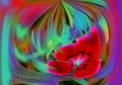 Multi Color Floral Abstract Art Print by Linda Phelps