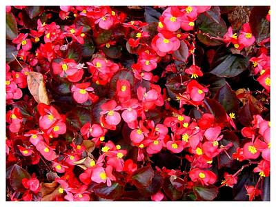 Photograph - Multitudinous Red And Yellow by Frank Wickham