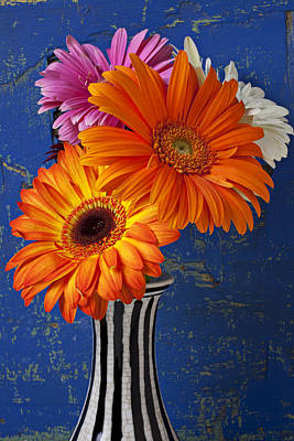 Mums In Striped Vase Art Print by Garry Gay
