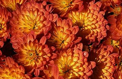 Mums Of A Different Color Art Print by Bruce Bley