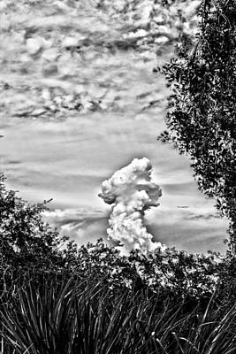 Manatee Co Photograph - Mushroom - Bw by Nicholas Evans