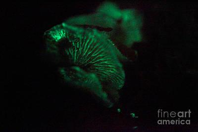 Mushroom Bioluminescence Print by Ted Kinsman