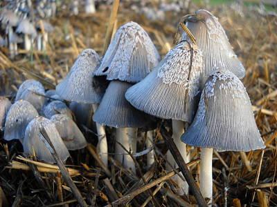 Photograph - Mushroom Family by Kent Lorentzen