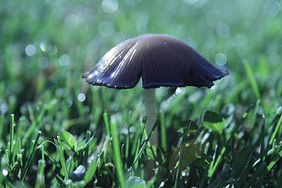 Photograph - Mushroom In Morning Light by Kristy Jeppson