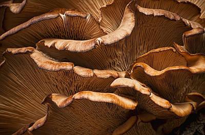 Photograph - Mushroom Waves by Ivelina G