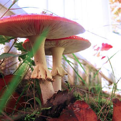 Photograph - Mushrooms 25 by Nop Briex