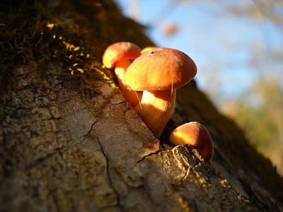 Photograph - Mushrooms And Willow Bark by Kent Lorentzen