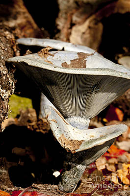 Photograph - Mushrooms In The Autumn Woods by Wilma  Birdwell