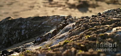 Mussels Sunset Art Print