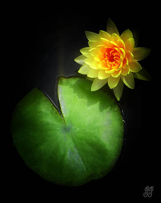 Lotus Blossoms Photograph - Must Be Love by Keren  Candiotti