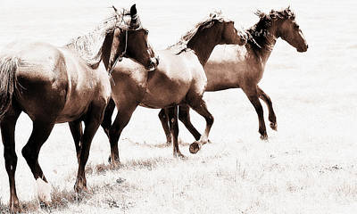 Photograph - Mustang - The Wild Icon by Elizabeth Hart