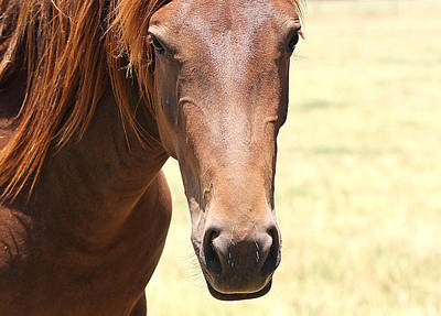 Photograph - Mustang Aire by Elizabeth Hart