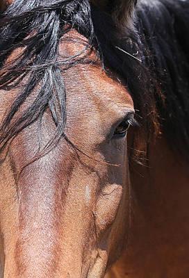 Photograph - Mustang Dream by Elizabeth Hart