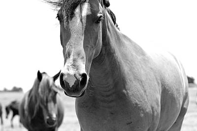 Photograph - Mustang by Elizabeth Hart