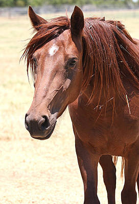 Photograph - Mustang Sally by Elizabeth Hart
