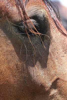 Photograph - Mustang Soul by Elizabeth Hart