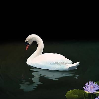 Mute Swan Original