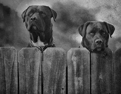 Pitbull Photograph - Mutt And Jeff 2 by Larry Marshall