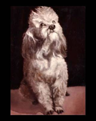 Painting - My Baby Poodle by Jordana Sands