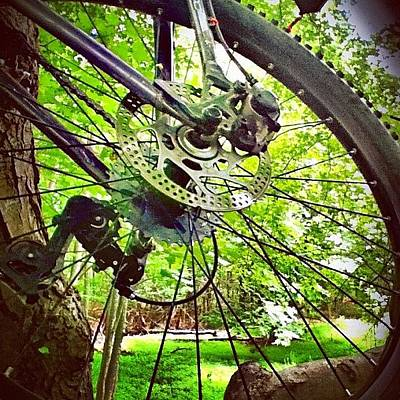 Mtb Photograph - My Bike Hanging Out In A Tree by Charles Dowdy