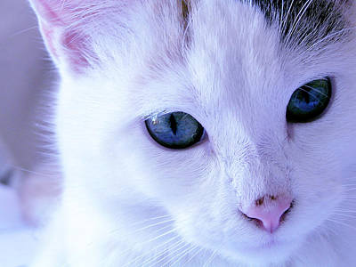 Photograph - My Blue Cat by Guadalupe Nicole Barrionuevo