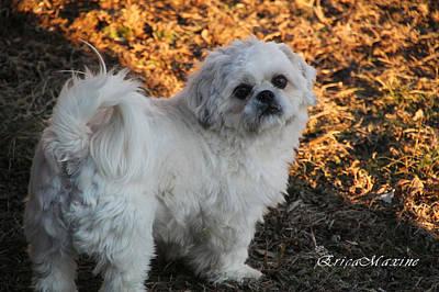 Photograph - My Bubba by Ericamaxine Price