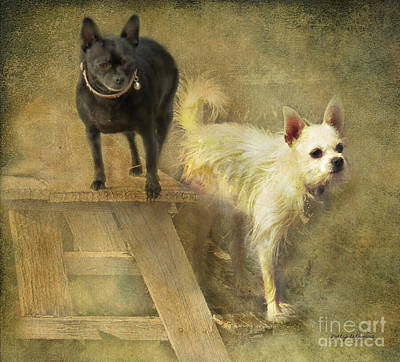 Chihuahua Digital Art - My Chihuahua Girlz  by Rhonda Strickland