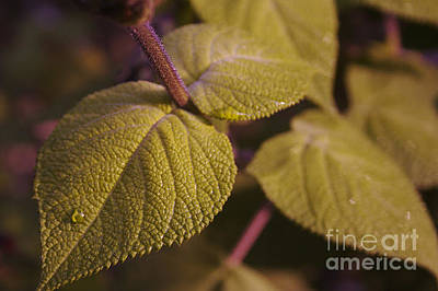 Photograph - My Favorite Leaves by Morgan Wright