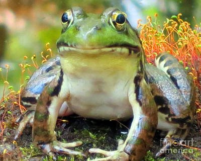 Photograph - My Frog Friend by Patricia Januszkiewicz