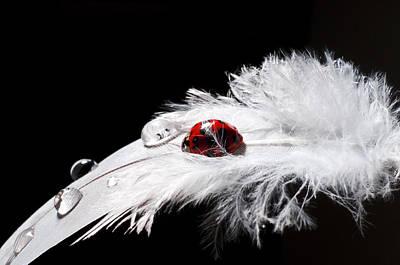 My Ladybug Original by Ivan Vukelic
