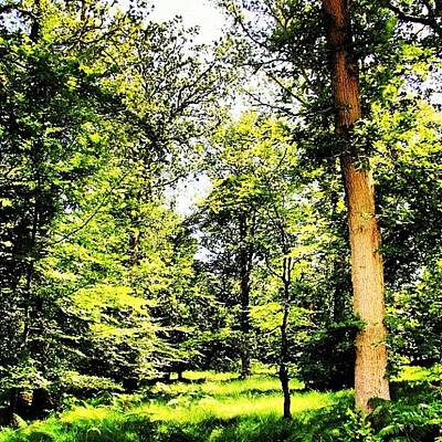Woodland Wall Art - Photograph - My Magical Woodland Clearing by Chris Barber