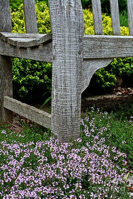 Photograph - My Old Bench by Susan Herber