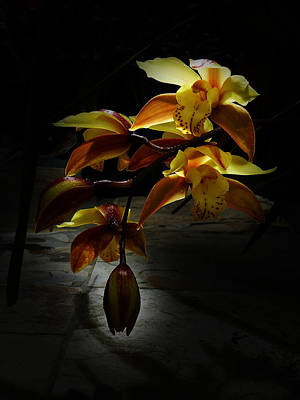 Photograph - My Orchid 2 by Xueling Zou