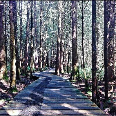 Trail Wall Art - Photograph - My #perspective During A Stroll Through by Victor Wong