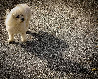 Photograph - My Shadow by Patrice Zinck