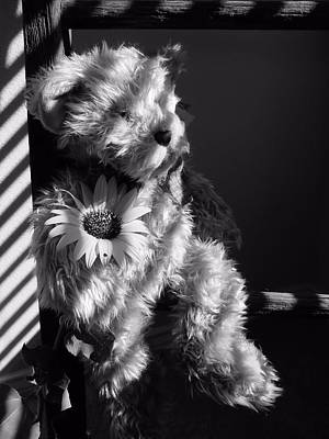 Photograph - My Teddy Bear by Lynnette Johns