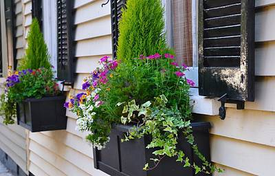 Photograph - My Tradd Street Window Boxes by Lori Kesten