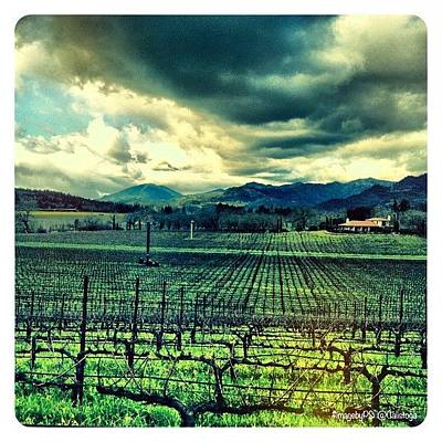Vineyard Wall Art - Photograph - My View Right Now From @ehlersestate by Peter Stetson