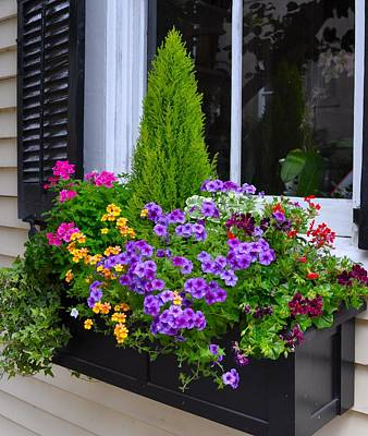 Photograph - My Window Boxes Late May by Lori Kesten