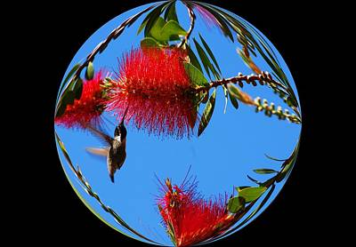 Photograph - My World - Hummingbirds by Lynn Bauer