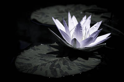 Waterlily Photograph - Mysterious Bloom  by Priya Ghose