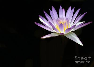 Photograph - Mysterious Water Lily by Sabrina L Ryan