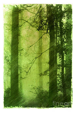 Mystical Glade Art Print by Judi Bagwell