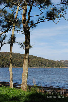 Photograph - Myuna Bay Foreshore by Fran Woods