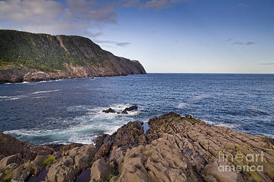 Sheep - Nagy Bay Newfoundland by Neil Speers